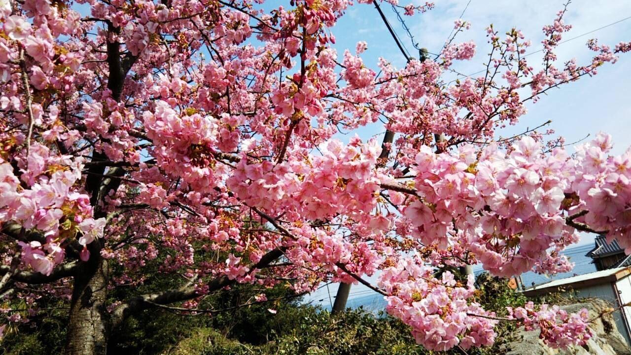 橘町から春の便り